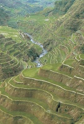 Farming on mountain terraces.